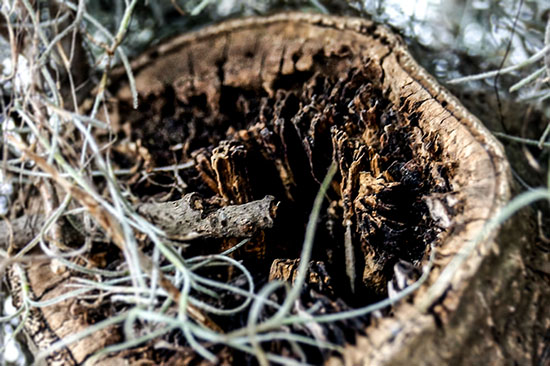 Pine Infused Log copyright @ Ashley Bremer