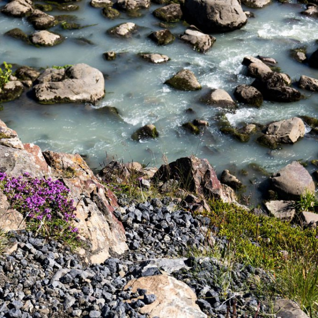 Rocky Shoreline copyright @ Ashley Bremer