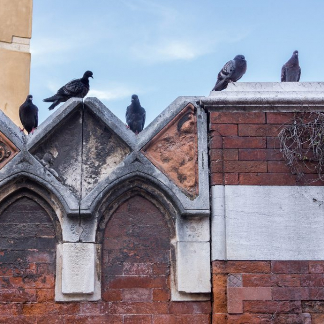 Pigeon Post copyright @ Ashley Bremer