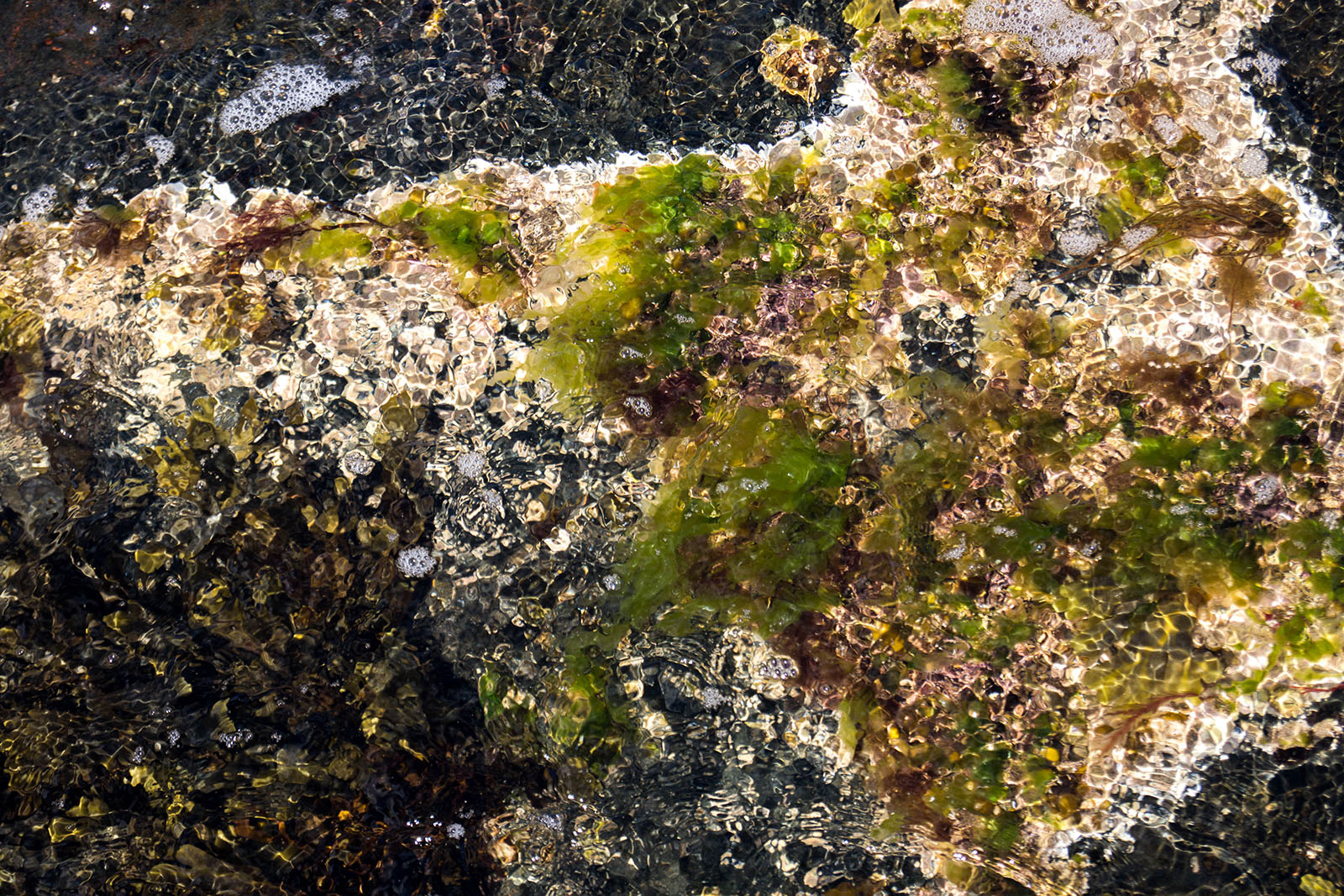 Underwater Moss copyright @ Ashley Bremer